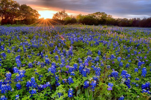 texas-bluebonnets-081